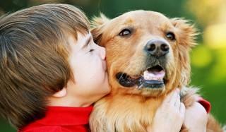5 Известных мифов о домашних животных