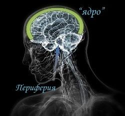 Альтернативный носитель сознания (анс)
