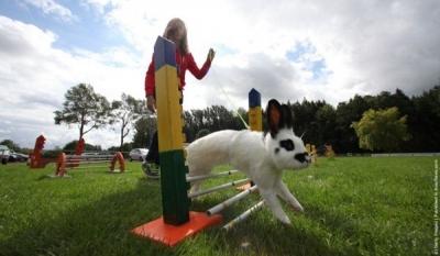 Бег среди кроликов