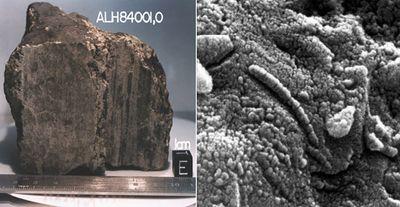 Биологи организовали горячий спуск камней с орбиты