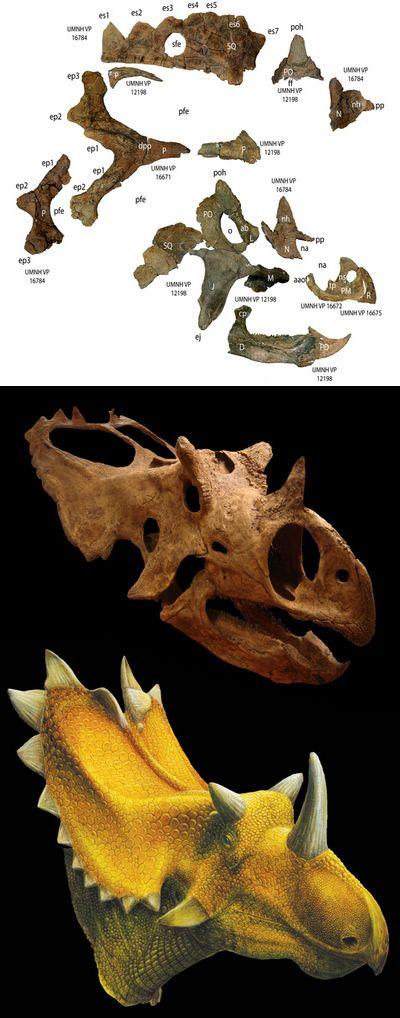 Богатые цератопсы укрепили гипотезу провинциализма динозавров