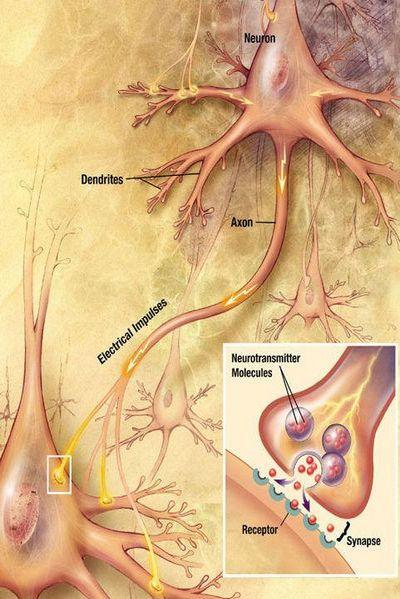 Изотопия сознания ижизнь после смерти