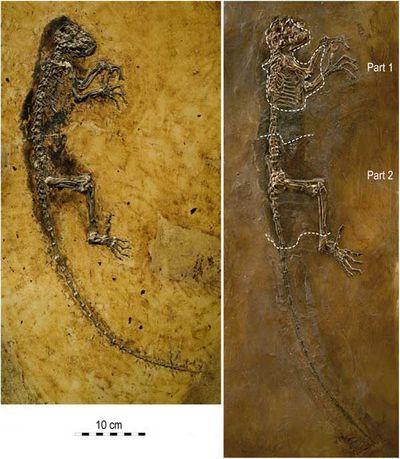 Каменная ида спорно встроилась в нашу эволюцию