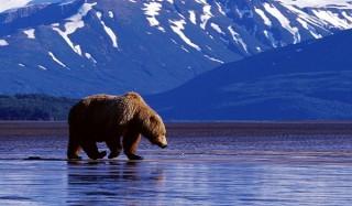 Кто, как и зачем на самом деле продал аляску?