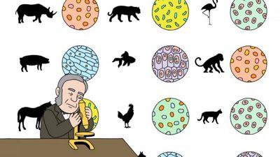 Множество теорий относительности, как 4х мерное подмножество моделей вселенной.