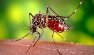 На что реагируют комары?