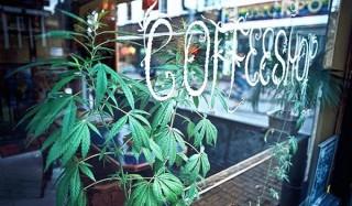 Нидерланды и наркотики: разрушаем стереотипы