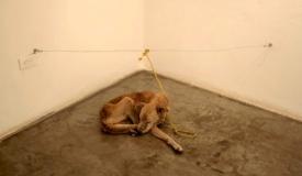 Первый в мире музей спасенных животных