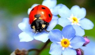 Почему жука прозвали божьей коровкой?