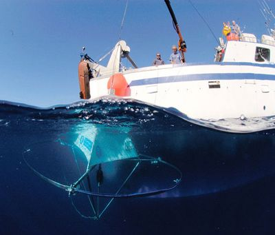 Подводные уши предупредят суда о сближении с глухими китами