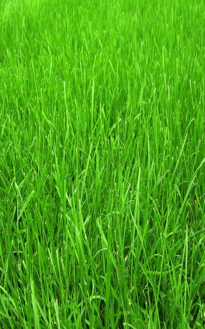 Проблемы и болезни газона