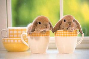 Разведение кроликов в домашних условиях (пример бизнес плана)
