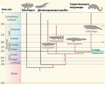 Самые древние следы тетраподов сдвинули эволюцию четвероногих