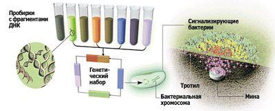 Синтетическая биология: жизнь 2.0 уже проходит бета-тестирование