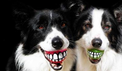 Ученые научились управлять собаками