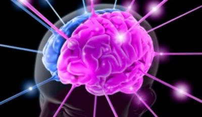 Ученые вырастили подобие мозга