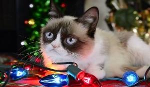 Знаменитые коты снялись в рождественском клипе (видео)